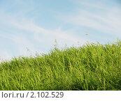Купить «Летний пейзаж. Высокая трава», фото № 2102529, снято 6 июня 2010 г. (c) Анна Николаева / Фотобанк Лори