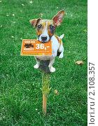 Купить «Картонная собачка - табличка на газоне», эксклюзивное фото № 2108357, снято 18 сентября 2009 г. (c) Wanda / Фотобанк Лори