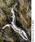 Коряга в форме крокодила (2007 год). Стоковое фото, фотограф Зуев Алексей / Фотобанк Лори