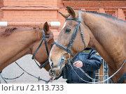 Купить «Милицейские лошадки. Конный патруль», фото № 2113733, снято 20 марта 2019 г. (c) Валерия Попова / Фотобанк Лори