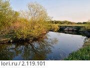 Цветет ива на берегу реки Миасс. Стоковое фото, фотограф Николай Решетников / Фотобанк Лори
