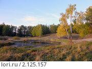 Купить «Осенний пейзаж с березами и соснами», фото № 2125157, снято 17 сентября 2010 г. (c) Виталий Горелов / Фотобанк Лори