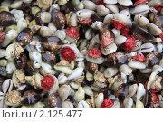 Купить «Ракушки, черепашки», фото № 2125477, снято 9 сентября 2010 г. (c) Мариэлла Зинченко / Фотобанк Лори