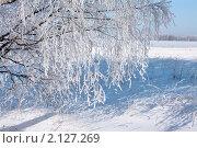 Зимний день. Береза в снегу. Стоковое фото, фотограф ElenArt / Фотобанк Лори