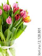Купить «Букет тюльпанов», фото № 2128801, снято 3 апреля 2009 г. (c) Наталия Кленова / Фотобанк Лори