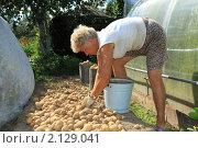 Купить «Пенсионерка собирает картофель», фото № 2129041, снято 14 августа 2010 г. (c) Антон Корнилов / Фотобанк Лори
