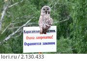 Сова-сторож. Стоковое фото, фотограф Гаушкина Ирина Борисовна / Фотобанк Лори