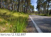 Купить «Красивый сосновый лес», фото № 2132897, снято 7 августа 2008 г. (c) Наталия Кленова / Фотобанк Лори