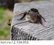 Шмель и муравей. Стоковое фото, фотограф Владимир Лобановский / Фотобанк Лори