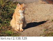 Купить «Рыжая кошка», эксклюзивное фото № 2138129, снято 9 октября 2010 г. (c) lana1501 / Фотобанк Лори