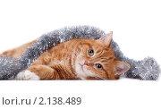 Купить «Рыжий кот с мишурой», фото № 2138489, снято 19 января 2019 г. (c) Cветлана Гладкова / Фотобанк Лори