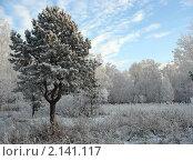 Купить «Зимний лес. Деревья в инее», фото № 2141117, снято 9 декабря 2007 г. (c) Светлана Ильева (Иванова) / Фотобанк Лори