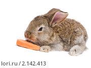 Купить «Кролик», фото № 2142413, снято 9 ноября 2010 г. (c) Дмитрий Калиновский / Фотобанк Лори