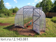 Купить «Теплица», фото № 2143081, снято 5 июня 2010 г. (c) Сергей Яковлев / Фотобанк Лори