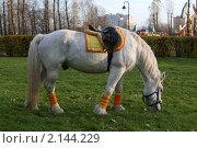 Лошадь щиплет траву в парке. Осень. Стоковое фото, фотограф Мария Васильева / Фотобанк Лори
