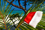 Шапочка Санты на пальмовой ветке, фото № 2145649, снято 30 марта 2017 г. (c) Михаил / Фотобанк Лори