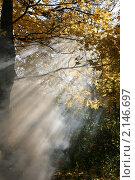 Осеннее утро. Стоковое фото, фотограф Ольга Зенухина / Фотобанк Лори