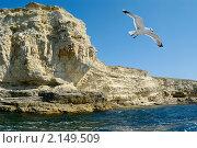 Купить «Чайка над морем», фото № 2149509, снято 25 марта 2019 г. (c) Сергей Павлов / Фотобанк Лори