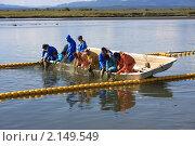 Купить «Промысел горбуши на Сахалине», фото № 2149549, снято 17 сентября 2009 г. (c) Пьянков Александр / Фотобанк Лори