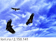 Купить «Три кондора в полете», фото № 2150141, снято 23 мая 2009 г. (c) Роман Сигаев / Фотобанк Лори