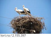 Купить «Два аиста в гнезде», фото № 2155397, снято 29 июля 2009 г. (c) Николай Голицынский / Фотобанк Лори