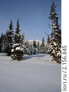 Зимний хвойный лес в Западной Сибири. Стоковое фото, фотограф Пашка Харлов / Фотобанк Лори