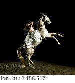 Купить «Романтичная девушка в белом платье верхом на белом коне», фото № 2158517, снято 9 ноября 2010 г. (c) Майер Георгий Владимирович / Фотобанк Лори