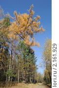 Купить «Дремучий лес», эксклюзивное фото № 2161929, снято 10 октября 2010 г. (c) Wanda / Фотобанк Лори