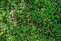 Фон из весенних лесных цветов, фото № 2163357, снято 19 января 2017 г. (c) Вадим Кондратенков / Фотобанк Лори