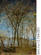 Отражение природы. Стоковое фото, фотограф Александр Степанов / Фотобанк Лори