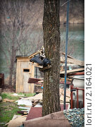 Коньки на дереве. Стоковое фото, фотограф Александр Степанов / Фотобанк Лори