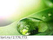 Купить «Капли воды», фото № 2176773, снято 6 июля 2008 г. (c) Иван Михайлов / Фотобанк Лори