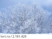 Дерево в снегу. Стоковое фото, фотограф Марина Когута / Фотобанк Лори