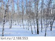 Зимние берёзы. Стоковое фото, фотограф Александр Гавриченко / Фотобанк Лори