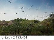 Купить «Стая птиц», фото № 2193461, снято 21 ноября 2010 г. (c) Юлия Севастьянова / Фотобанк Лори