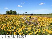 Купить «Велосипед среди одуванчиков», фото № 2193537, снято 25 мая 2009 г. (c) Сергей Яковлев / Фотобанк Лори