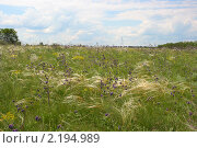 Купить «Хомутовская степь. Донецк, Украина», фото № 2194989, снято 31 мая 2009 г. (c) Артем Поваров / Фотобанк Лори