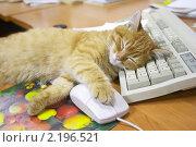 Купить «Кошка спит на клавиатуре», фото № 2196521, снято 8 декабря 2005 г. (c) Сергей Прищепа / Фотобанк Лори