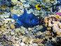 Тропические рыбы и морской еж на коралловом рифе в Красном море, Египет, фото № 2200029, снято 14 января 2010 г. (c) Михаил Марковский / Фотобанк Лори