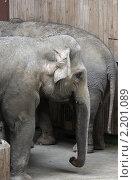 Московский зоопарк. Слон. Стоковое фото, фотограф Дмитрий Неумоин / Фотобанк Лори