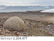 Купить «Земля Франца Иосифа, остров Чамп, круглые камни», фото № 2204477, снято 2 августа 2010 г. (c) Владимир Мельник / Фотобанк Лори