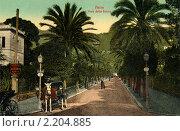 Купить «Аллея пальм в курортном городе Нерви. Италия», фото № 2204885, снято 5 июня 2020 г. (c) Юрий Кобзев / Фотобанк Лори
