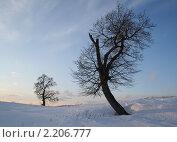 Две одиноко стоящие осины. Стоковое фото, фотограф Светлана Илькова / Фотобанк Лори