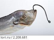 Вяленая рыба на рыболовном крючке. Стоковое фото, фотограф Чуев Максим / Фотобанк Лори