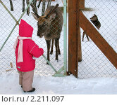 Купить «Ребенок и олень», эксклюзивное фото № 2211097, снято 31 января 2010 г. (c) Щеголева Ольга / Фотобанк Лори
