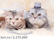 Купить «Кот и кошка - жених и невеста», фото № 2215669, снято 30 октября 2010 г. (c) Алексей Многосмыслов / Фотобанк Лори