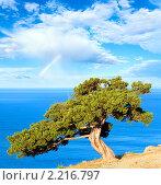 Купить «Дерево можжевельника на фоне моря», фото № 2216797, снято 15 июня 2009 г. (c) Юрий Брыкайло / Фотобанк Лори