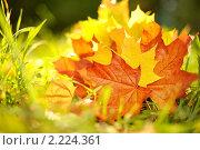 Купить «Осенние листья», фото № 2224361, снято 2 октября 2009 г. (c) Andrejs Pidjass / Фотобанк Лори