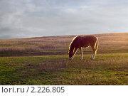 Пасущаяся лошадь. Стоковое фото, фотограф ASA / Фотобанк Лори