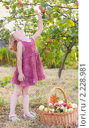 Купить «Девочка с яблоками», фото № 2228981, снято 11 августа 2010 г. (c) Майя Крученкова / Фотобанк Лори
